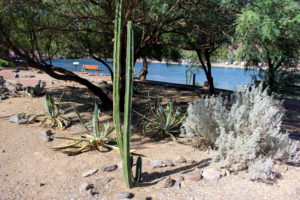 Cactus Garden at Buckskin Mountain (2)