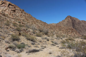 Sonoran side of Joshua Tree NP