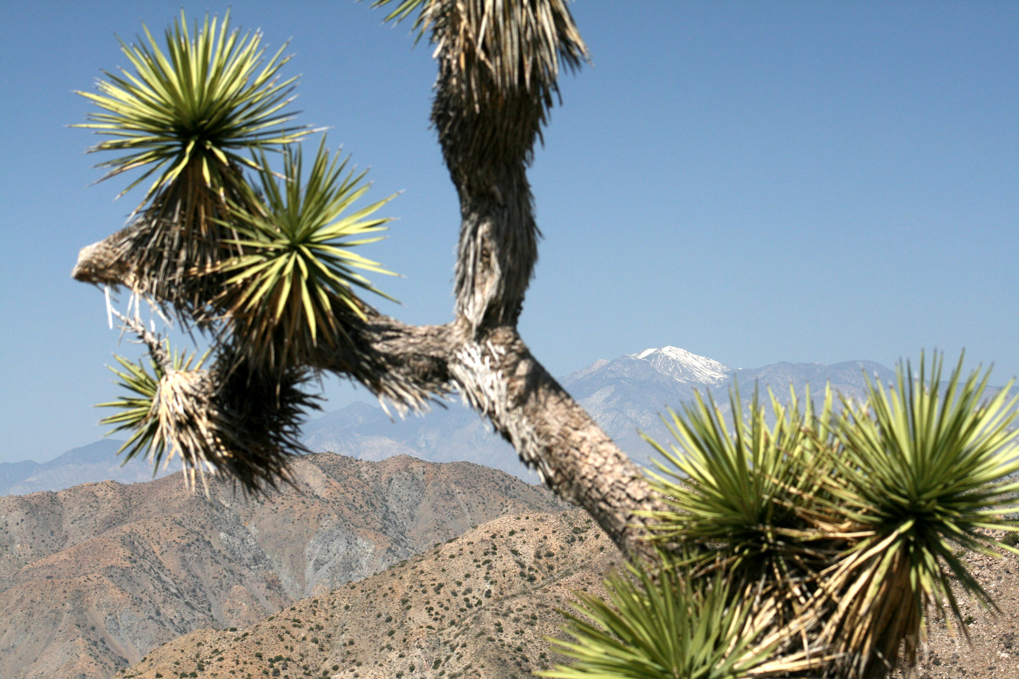 Joshua Tree and Mt Gorgonio